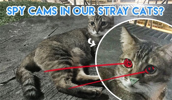 Spy cameras installed in Singaporean stray cats