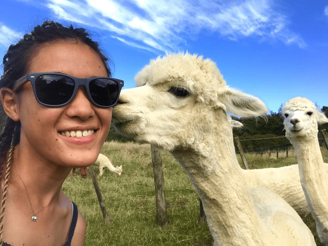 WWOOFing with alpacas in New Zealand