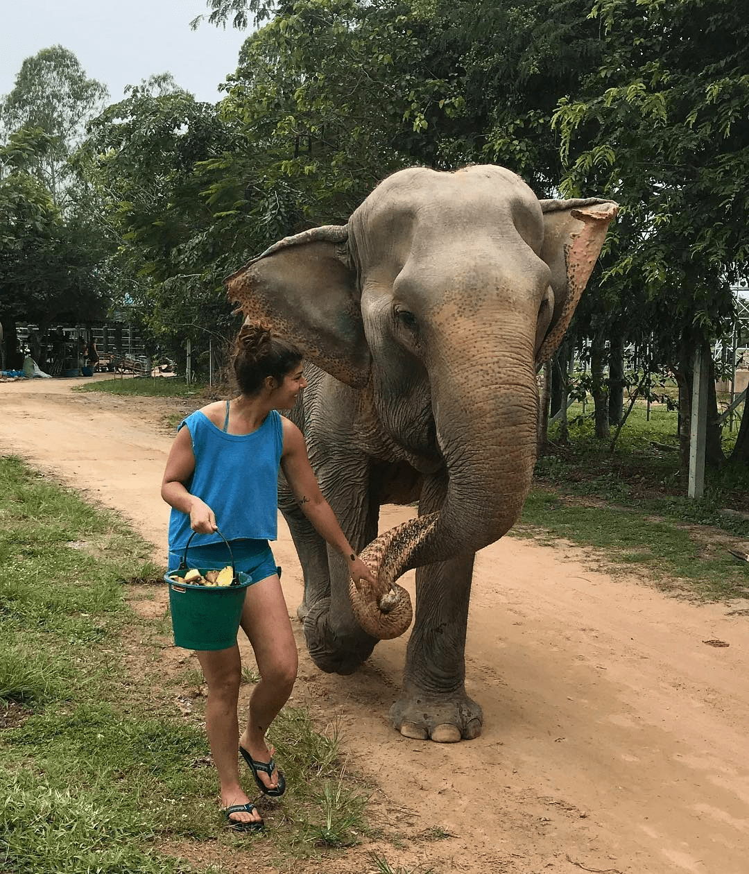 Volunteering at animal rescue centre - elephants