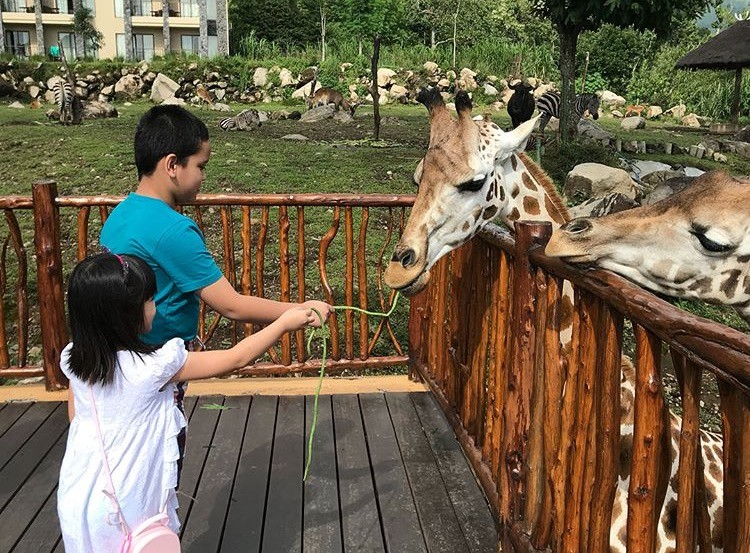 children feed zoo giraffe hotel indonesia