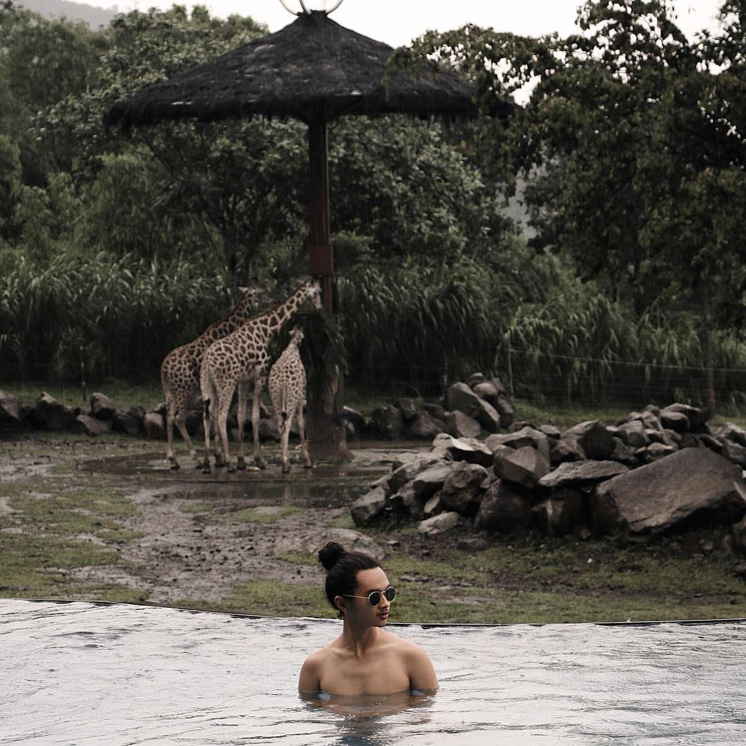 safari zoo infinity pool swim