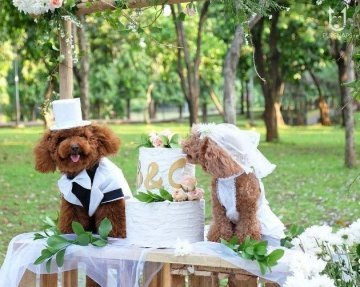 CHIJMES Is Having A Mass Wedding For Pets With Marriage Certificates And Bride & Groom Costumes