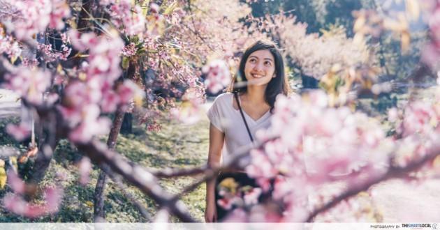 Chiang Rai - Thailand's Sakura Hot Spot Has A Matcha Plantation & A Ryokan Cafe