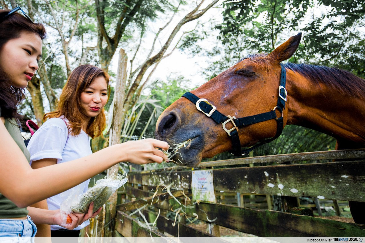 the animal resort seletar horse feeding