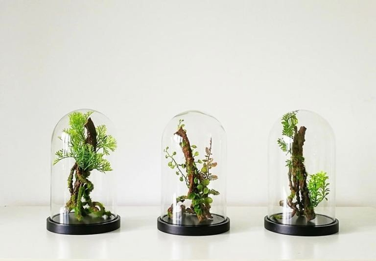 terrarium shipping singapore