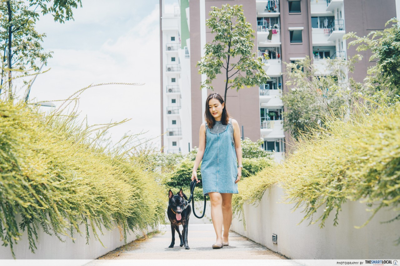 walking dogs adopted singaporean special stray