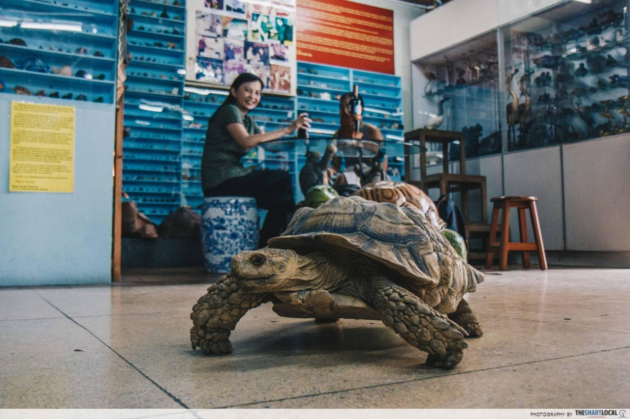 Live Turtle and Tortoise Museum singapore