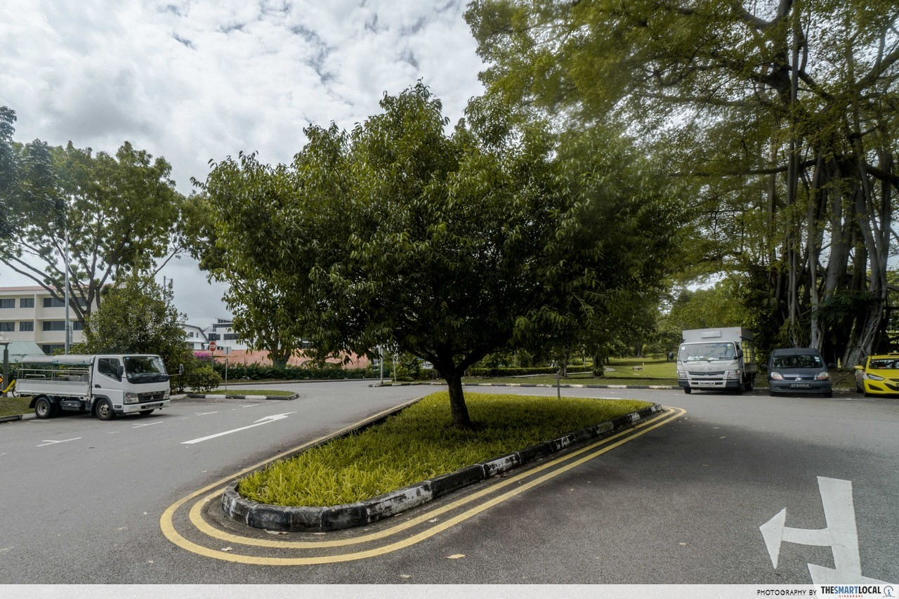 Sembawang Tree