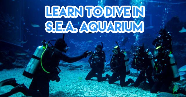 Guide To Learning Scuba Diving In Singapore 2018 - Requirements ...
