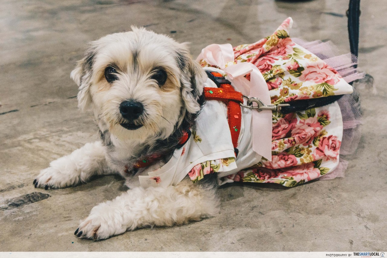 Dressing up your dog at the PetExpo