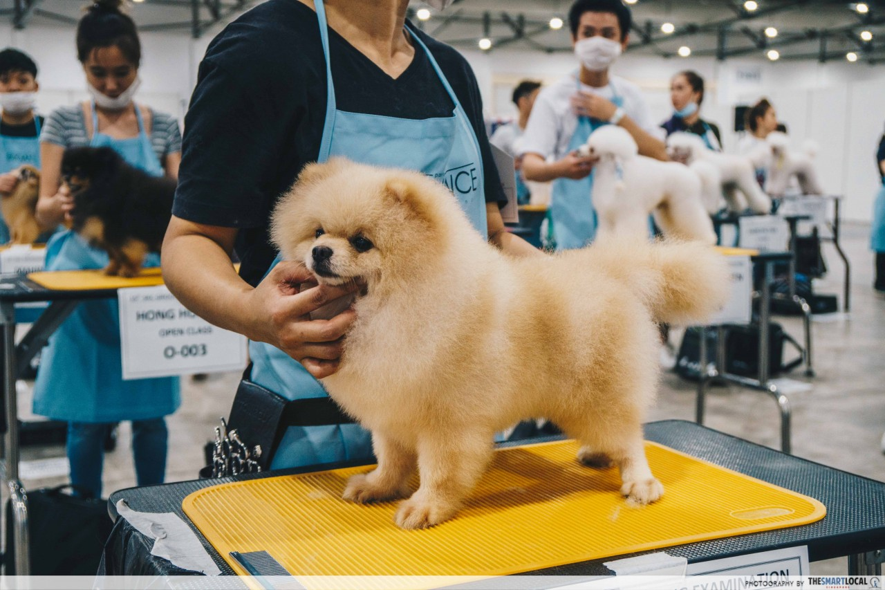 Dog grooming at the PetExpo