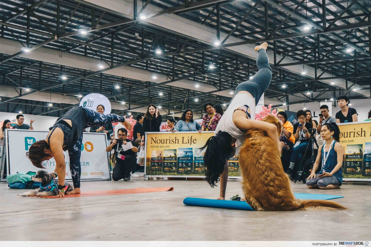 Trying out yoga with your dog at the Pet Expo