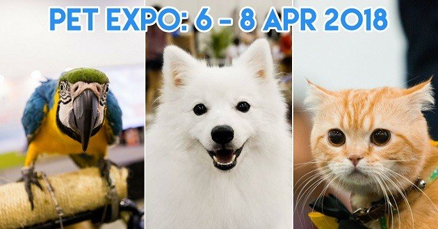 6 Activities At PetExpo 2018 That Will Upgrade Your Fur Kid's SES Status
