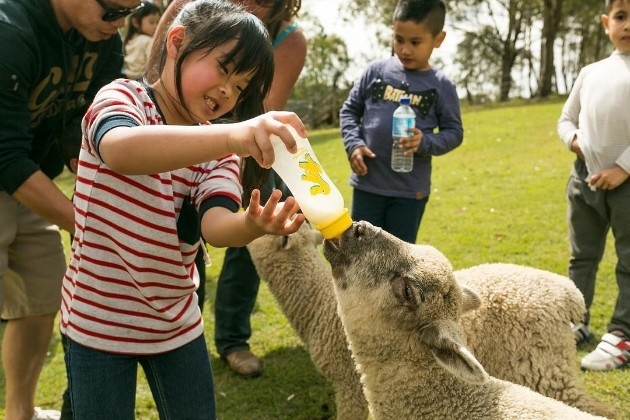 Feeding the farm animals during your farmstay