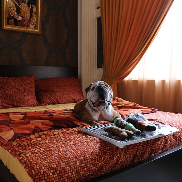 Pet Hotel Bangkok Review