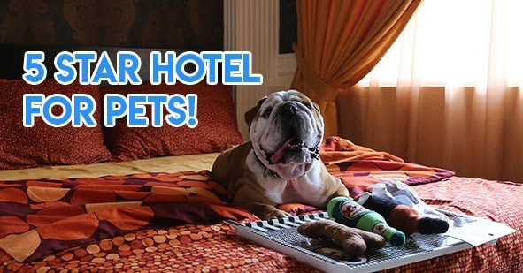 Pet hotels - 5 star pet hotel