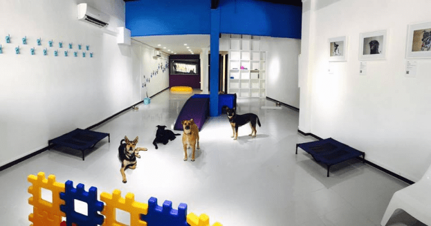 Pet hotels - doggies galore
