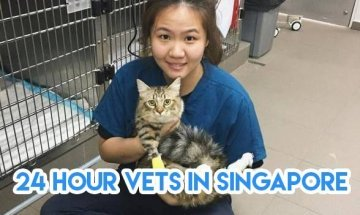 11 24-Hour Vets In Singapore Sorted By Location To Bookmark For Emergencies At 3am