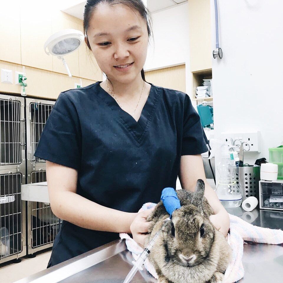 rabbit vet in singapore