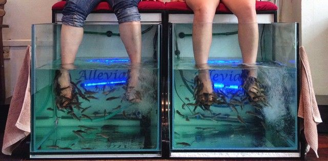 5 Fish Spas In Singapore From $10 To Shed Dead Skin & Overcome Your Fear Of Tickles