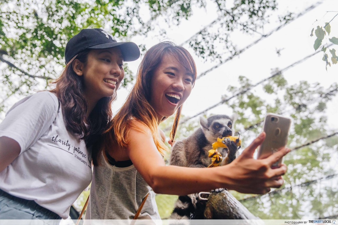 Selfie with ring tailed lemurs singapore zoo
