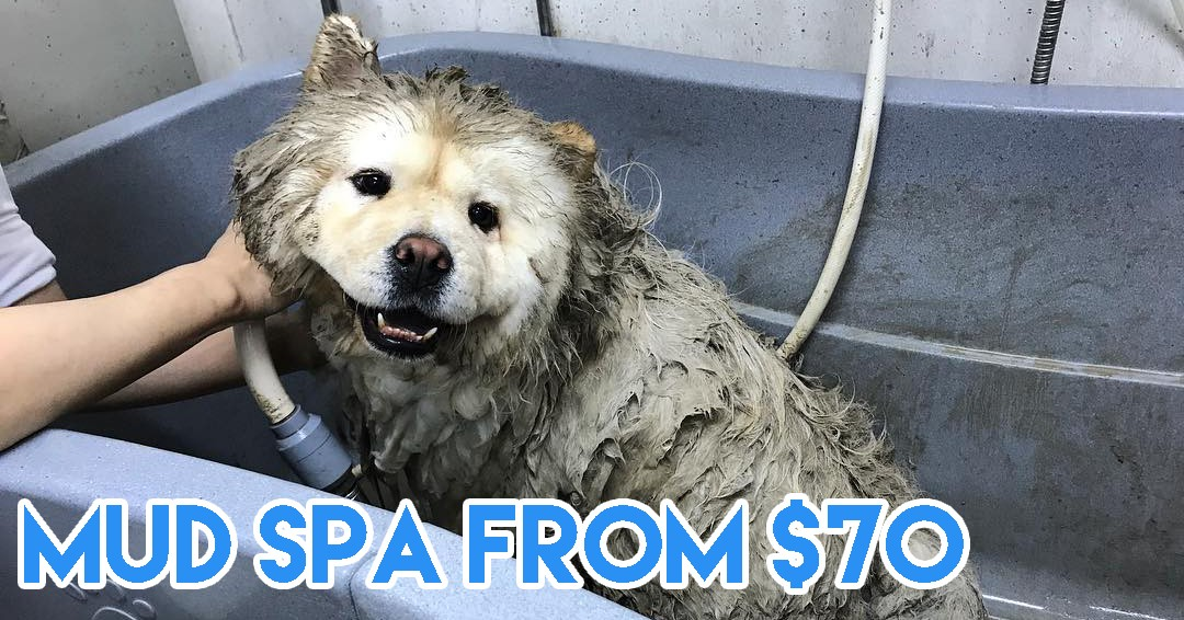 Dog spas in Singapore - mud spa