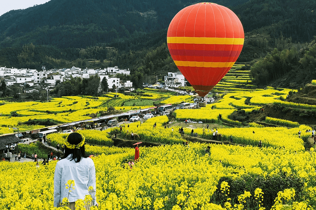 canola flowers hot air balloon