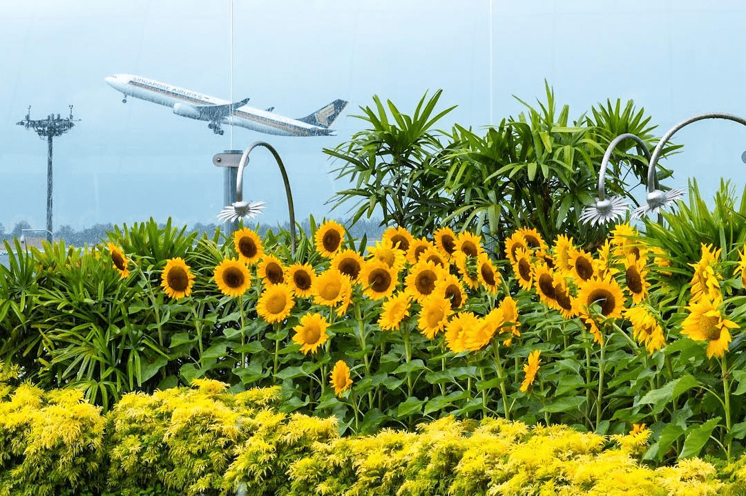 sunflower garden changi airport