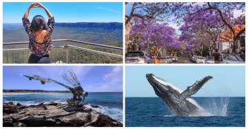 7 Must-Try Things To Do In Sydney In Spring - Bondi Beach Sculptures, Whale Watching & More