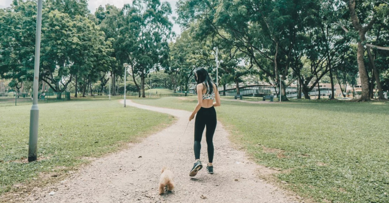 15 Free Dog Runs/Dog Parks In Singapore For Chubby Doggos To Exercise & Socialise At