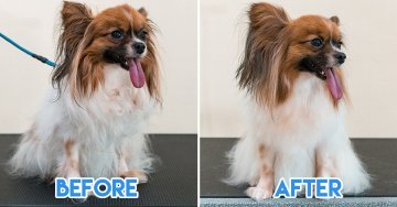 Pawtraits Is A Pet Grooming Salon With Spa Services, Pet Boarding, And Free 2-Way Transport