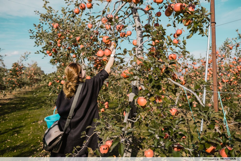 What to do in Azumino, Japan - fruit-picking