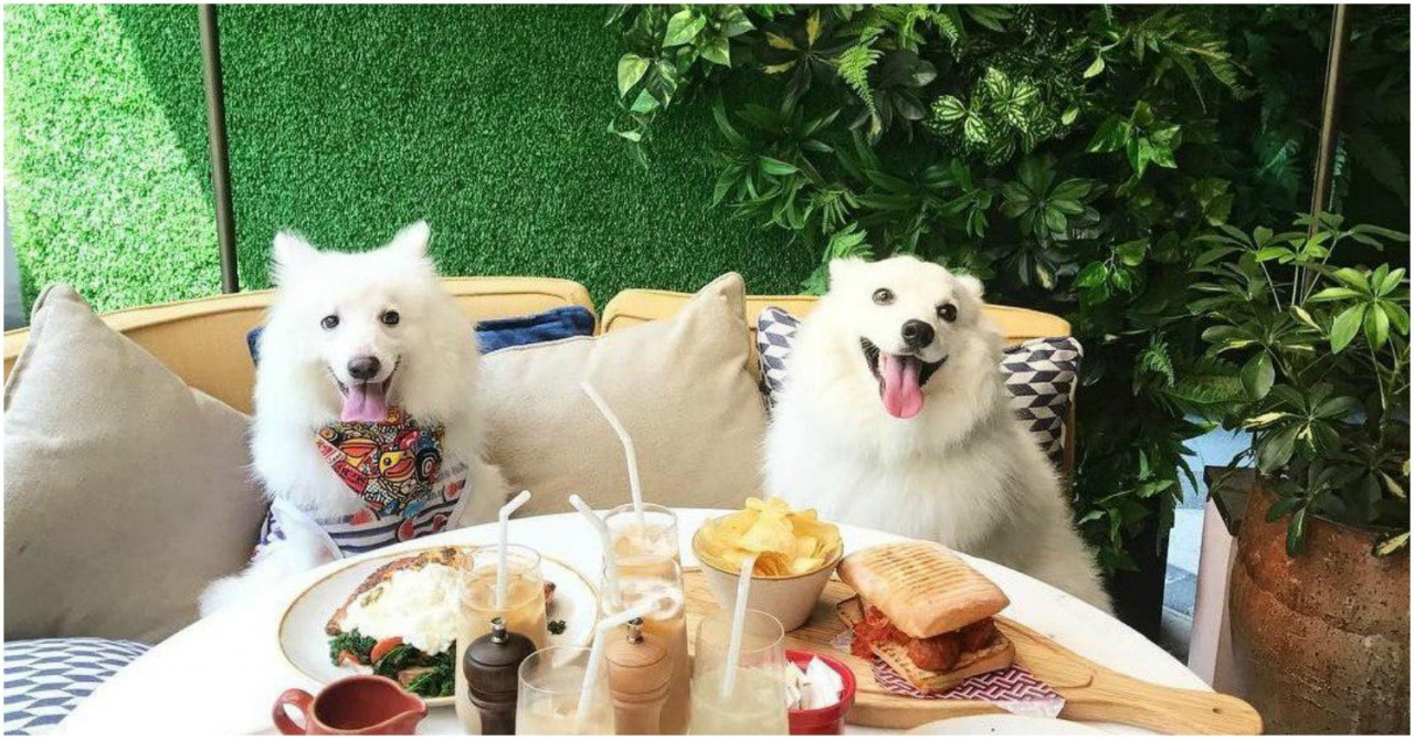11 Dog-Friendly Cafes & Restaurants In Singapore That You Can Dine At With Your Pup