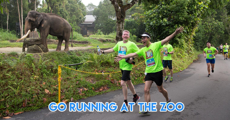 Safari Zoo Run 2019 - This 12km Race Through Singapore Zoo & Night Safari Is Unlike Any City Marathon