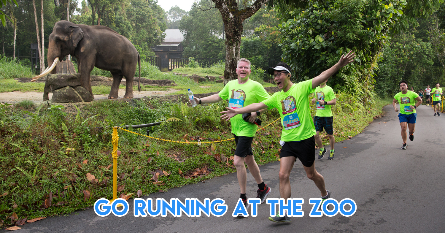 Safari Zoo Run 2019 - This 12km Race Through Singapore Zoo & Night Safari Is Unlike Any City Marathon