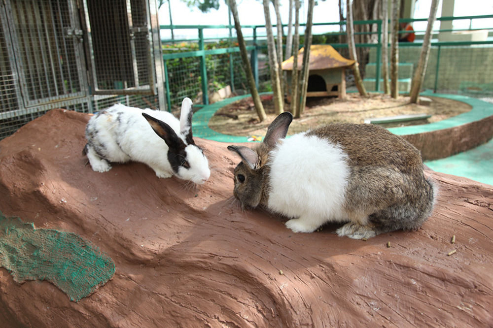 glory beach resort port dickson bunny play pen