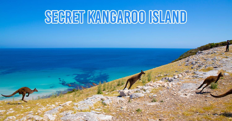 7 Unreal Wildlife Experiences Hidden Only In Australia That Go Beyond Selfies With Koalas