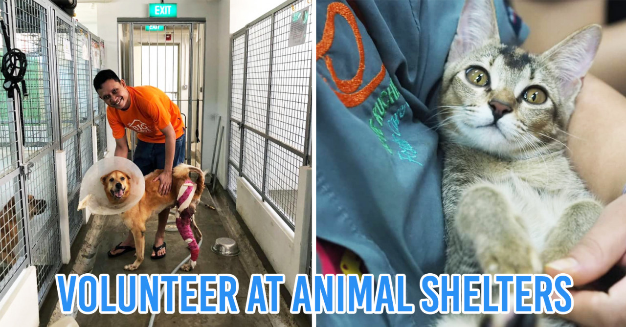 10 Places For Animal Lovers To Volunteer At In Singapore