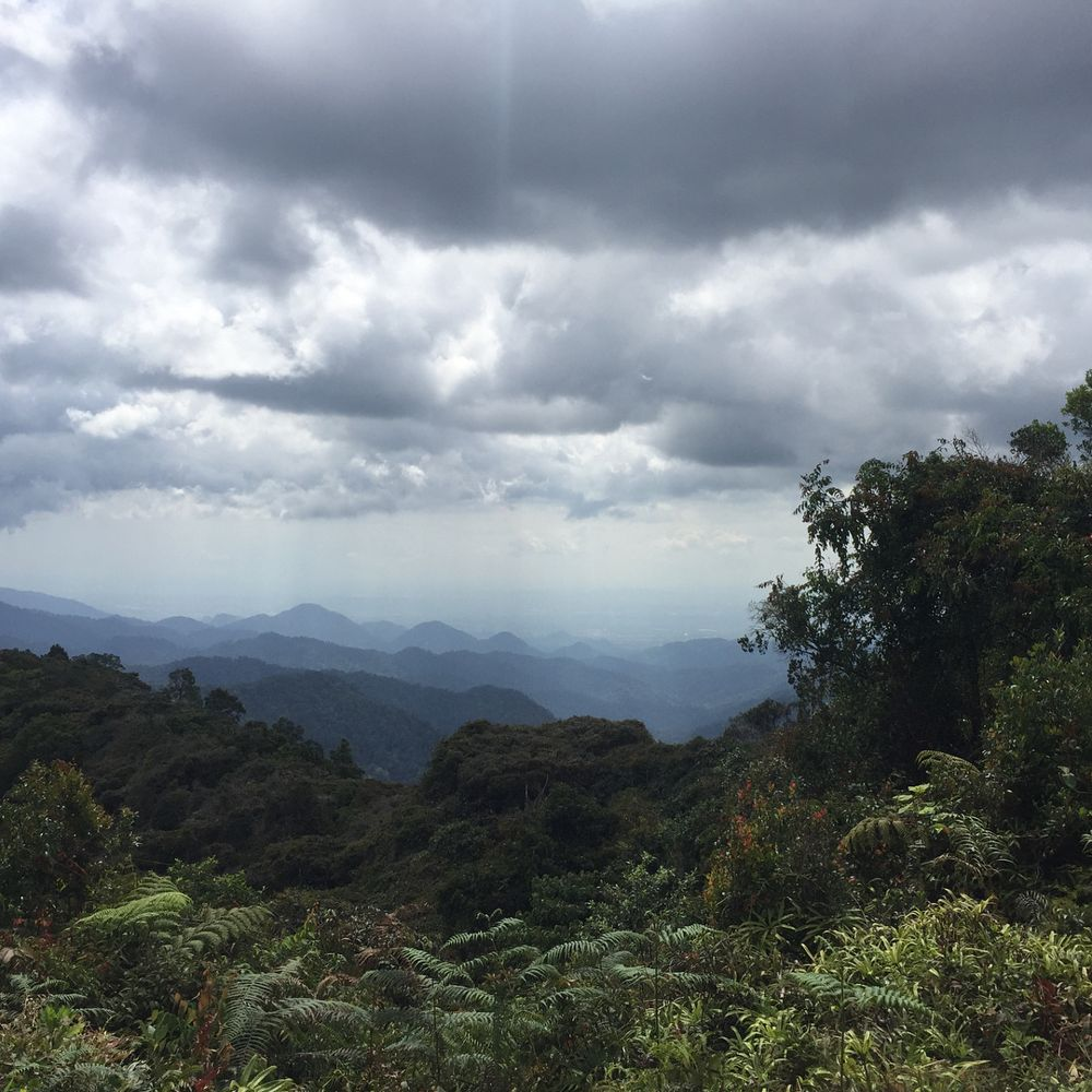 View from the peak of Cameron Highlands hiking trail