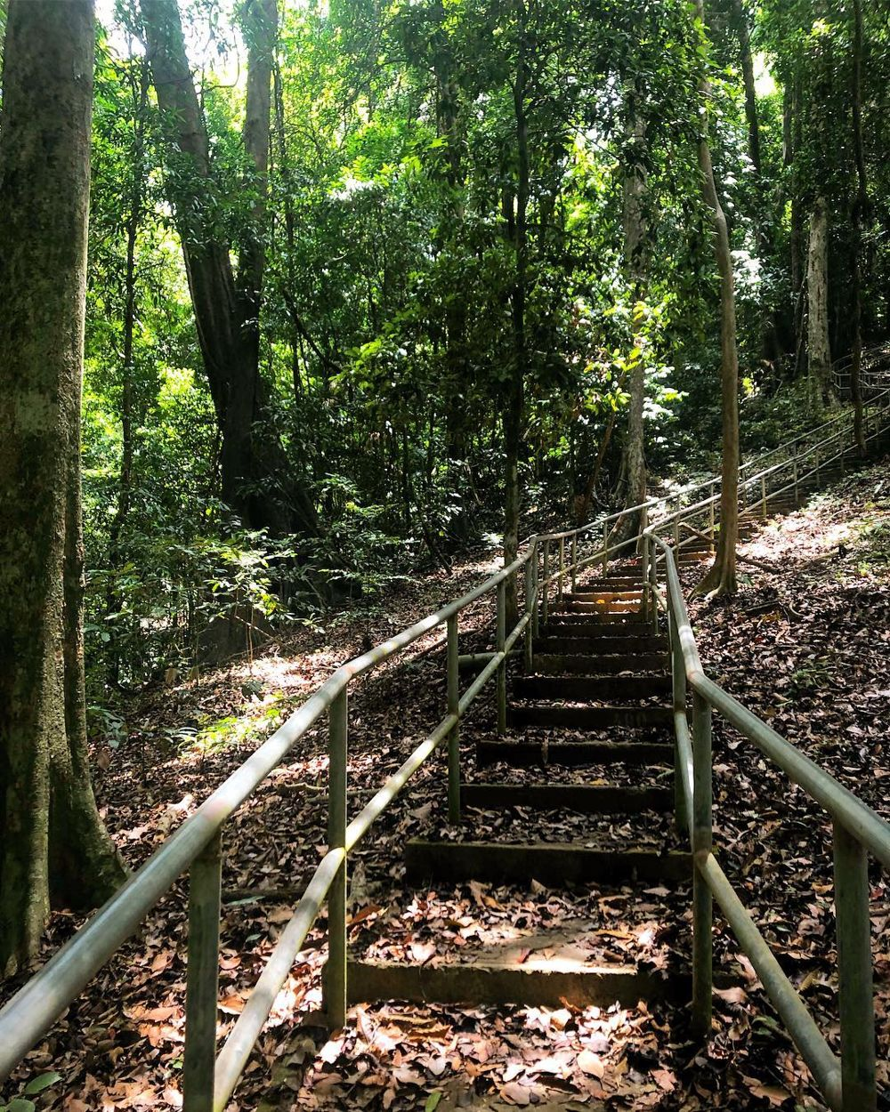 Staircase hiking trail at Mount Raya, Langkawi