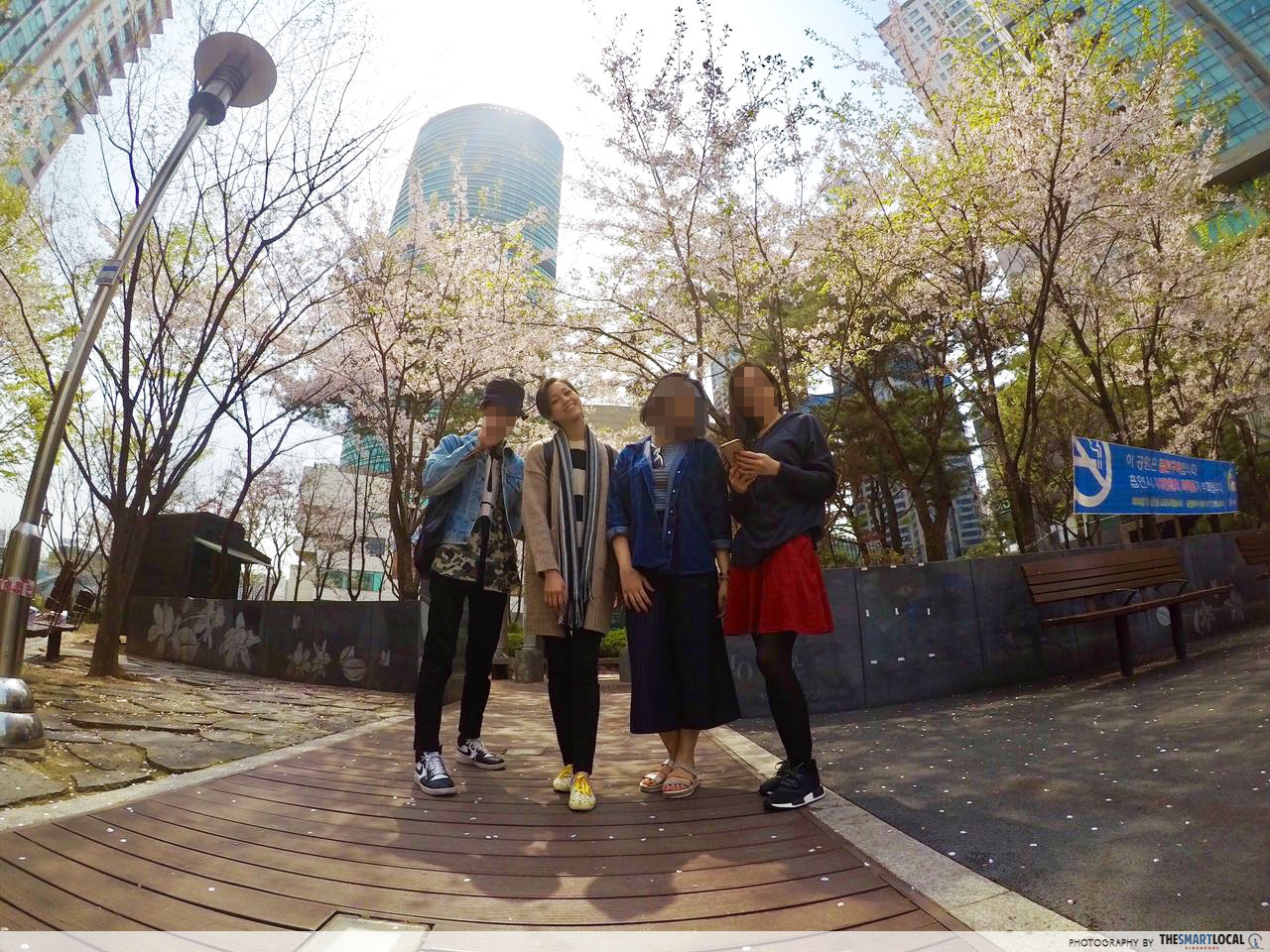 Group pic in Seoul with cherry blossoms