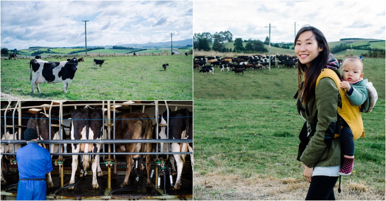 6 Things I Learnt About Formula Milk At A Farm 5,000 Miles Away In New Zealand