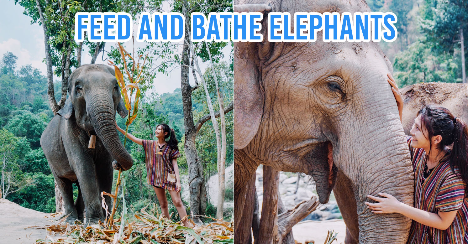 We Visited An Ethical Elephant Sanctuary In Chiang Mai To Find Out How To Care For Elephants