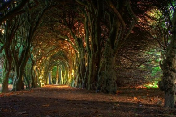 b2ap3_thumbnail_09-tree-tunnel.jpg