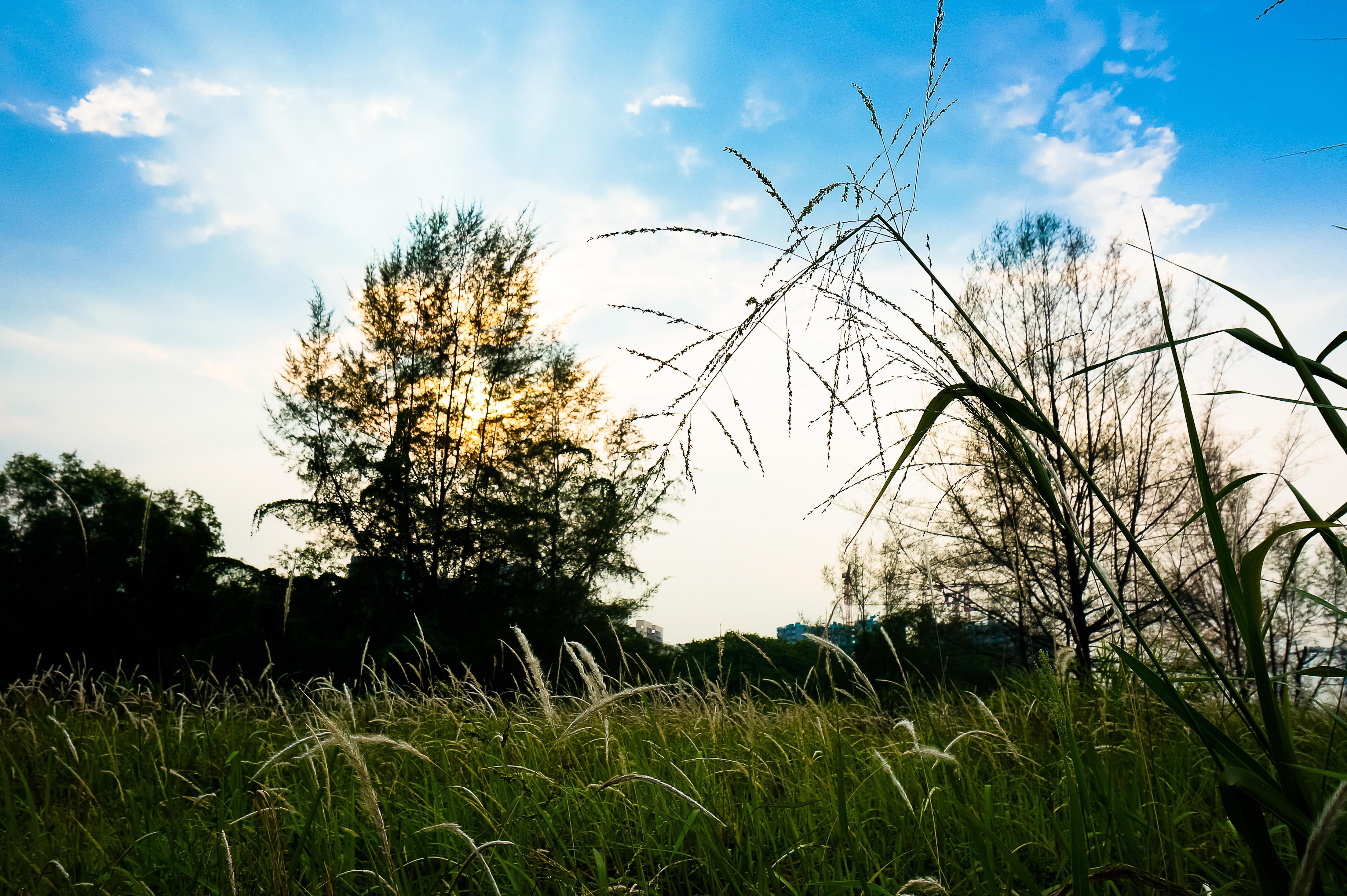 1 Punggol Lalang Field