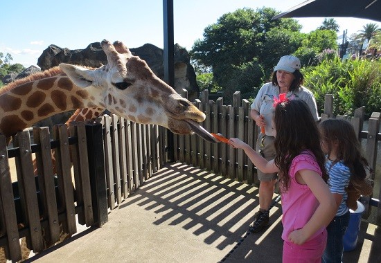 10 Exciting Activities To Do In Sydney This Weekend Your Kids Will Love You For