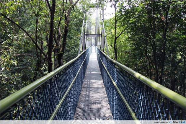 MacRitchie Reservoir TreeTop Walk Guide: Don't Get Lost Finding This Magical Singapore Spot