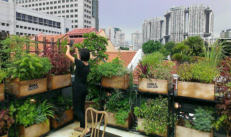 10 hidden farms in singapore you never knew existed for Como hacer un jardin pequeno
