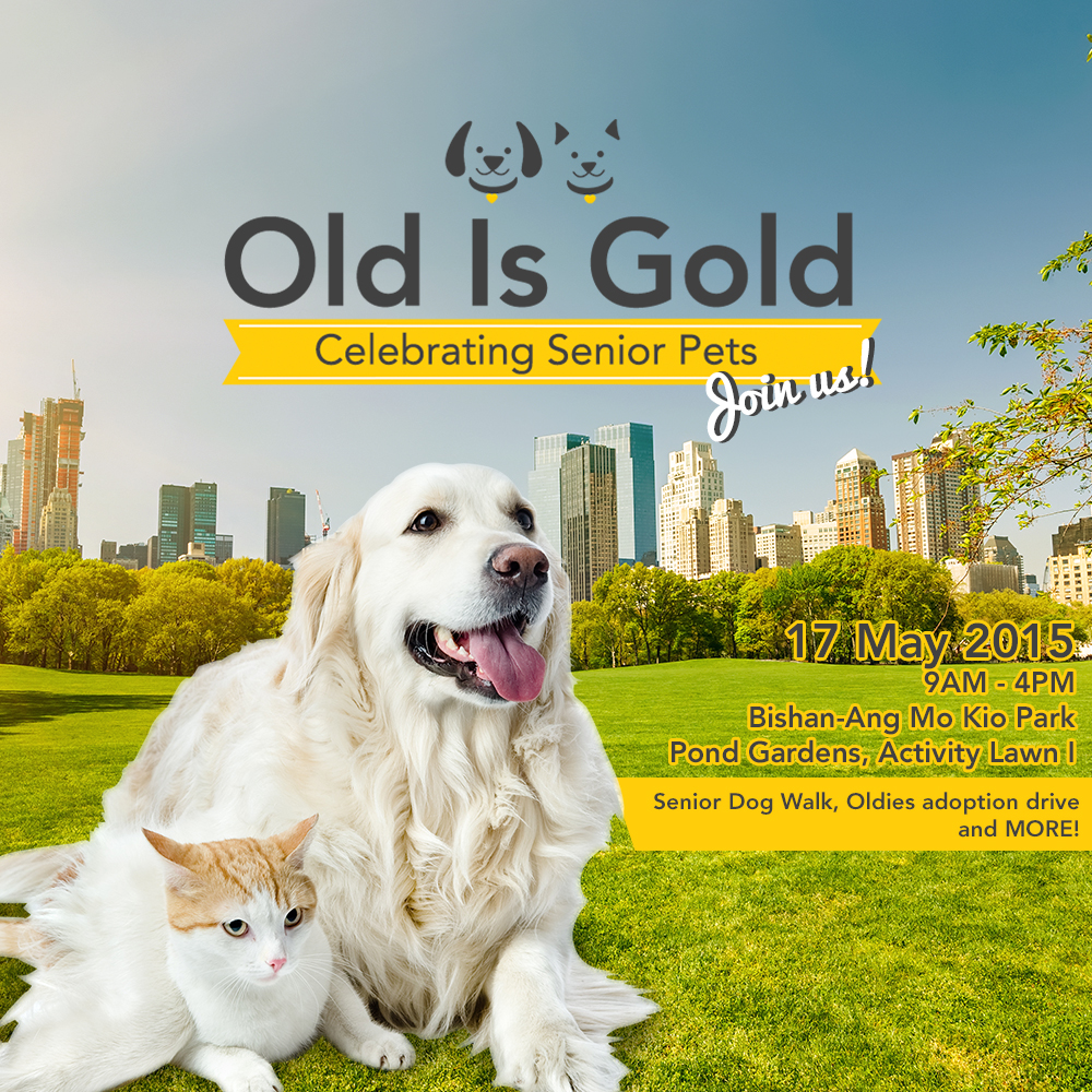 Old Is Gold: Pet Walk and Adoption Drive for Senior Pets on 17 May 2015