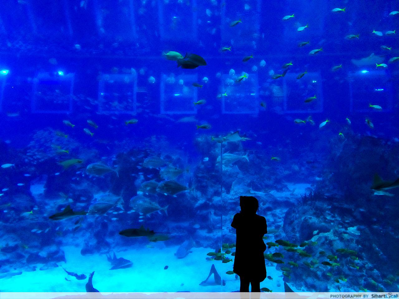Sea Aquarium Rws 5 Jpg